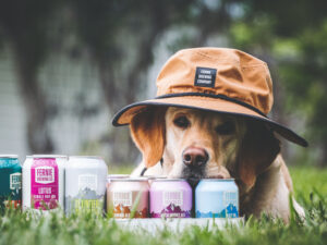 A dog laying his face on top of beers